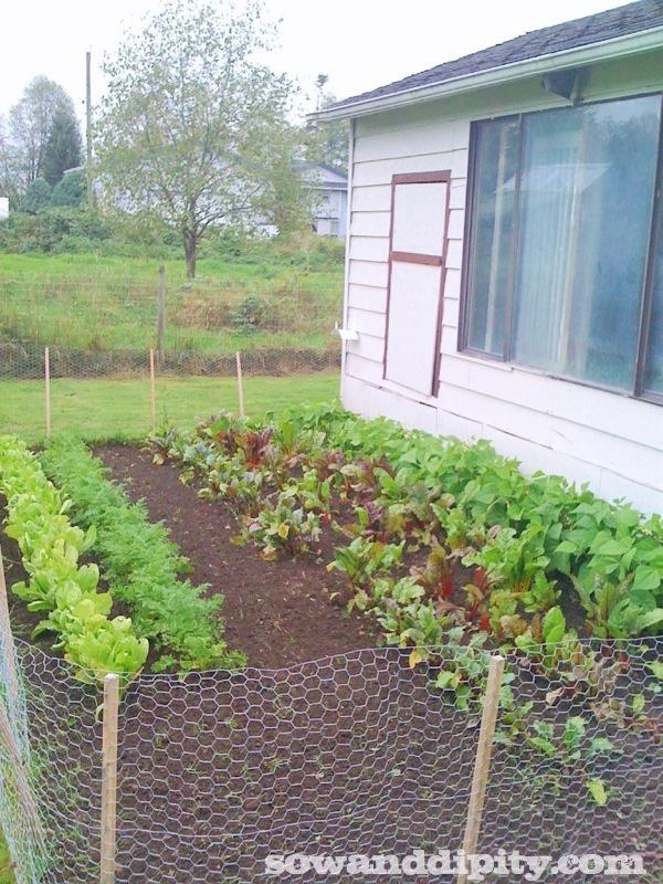 september garden bed