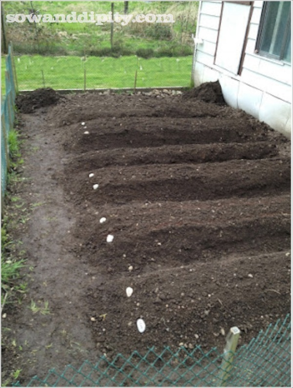 preparing a garden bed