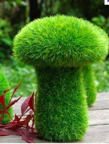 Mossy Mushroom