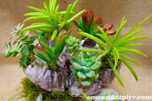 succulents and seashells_new