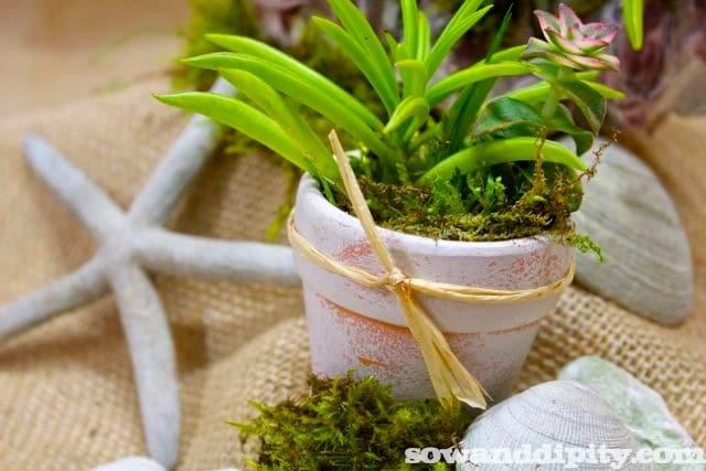 succulents and terra cotta