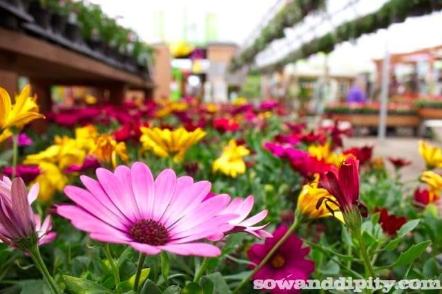 Pink Flower, Milner Village Garden Center