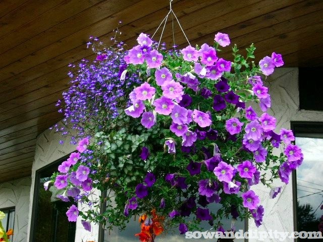 Purple themed hanging basket