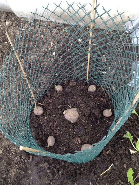potato cage