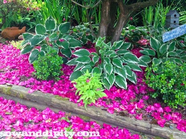 rhodo flower carpet