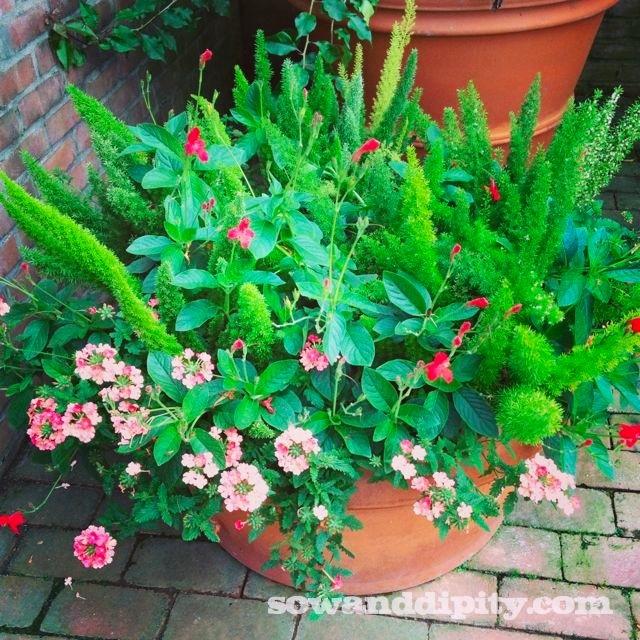 tropical planter
