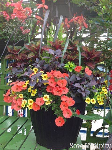 Planter Designs, Sow and Dipity 26
