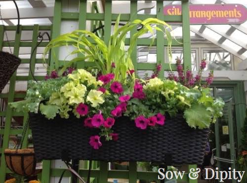 Planter Designs, Sow and Dipity 5