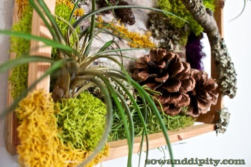 DIY Living Wall with Air Plants