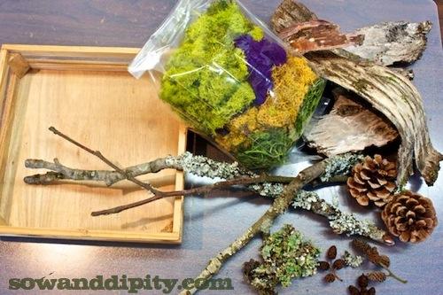 woodland materials for moss art