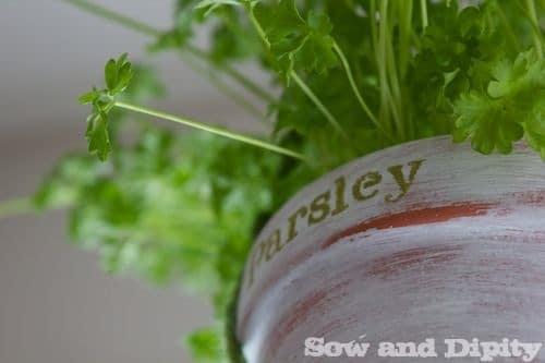 DIY Macrame Herb Hanger 1