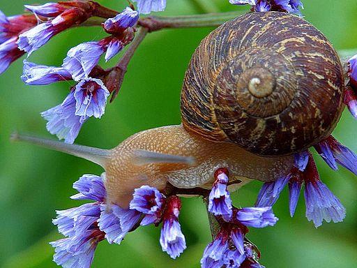Snail on flowers