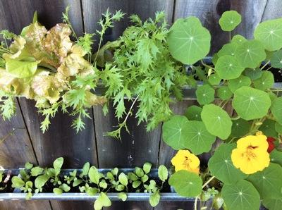 Gutter Garden by Corner Blog