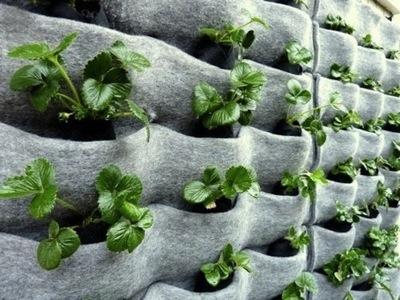 Florafelt by Plants on Walls