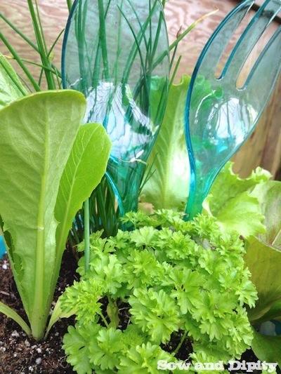 Salad Planter (1)