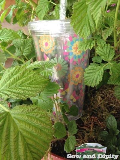 Smoothie Planter (1)