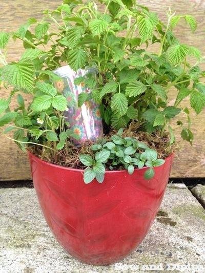 Smoothie Planter