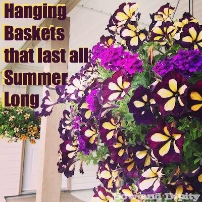 Hanging baskets that last
