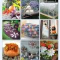 22 Fall Garden Inspirations