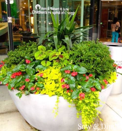 Planter Designs, Sow and Dipity 33