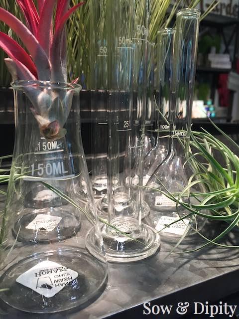 beaker flower vases