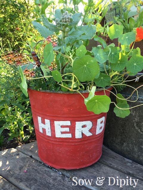 Edible Flower Herb Planter