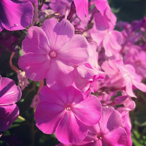 Flowerfetti (1)