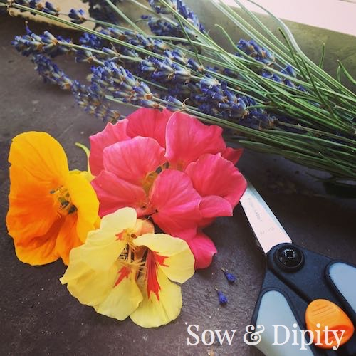 Harvesting edible blossoms