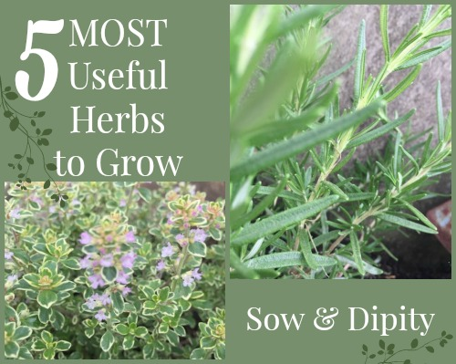 most useful herbs to grow