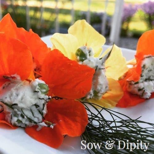 Herb cheese stuffed Nasturtiums (1)