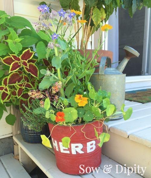 edible flower planter (1)