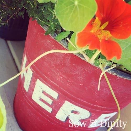 edible flower planter