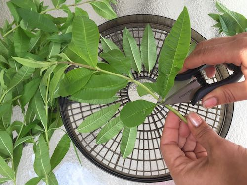 Herbal Oil's and Vinegars (2)