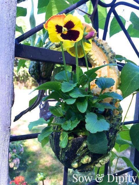 Crookneck gourd planter (1)