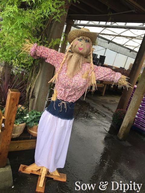Dixie scarecrow