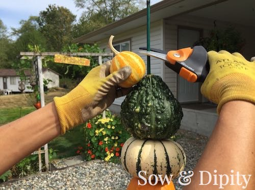Fall crafts with gourds (5)