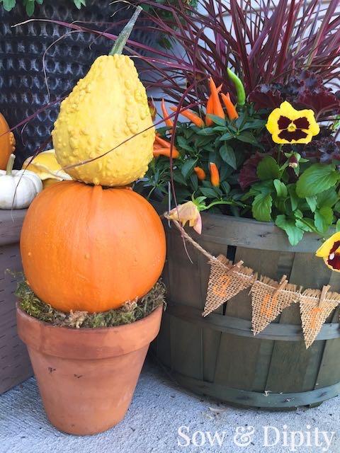 Gourd Topiaries (1)