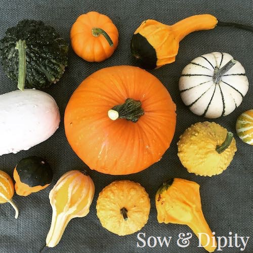 Fall Crafts with Gourds