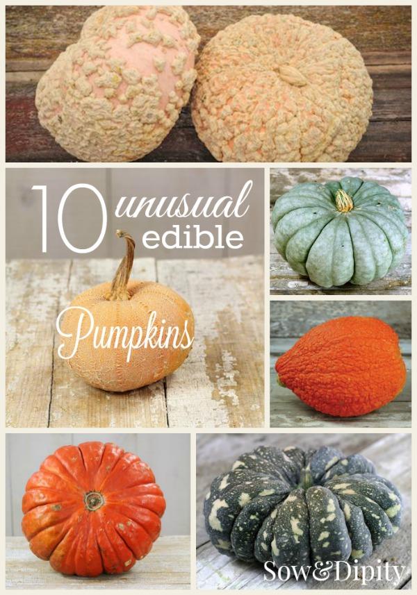 10 Unusual Edible Pumpkins