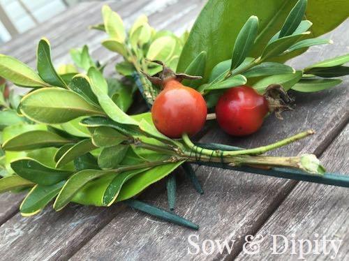 Apple topiary (4)