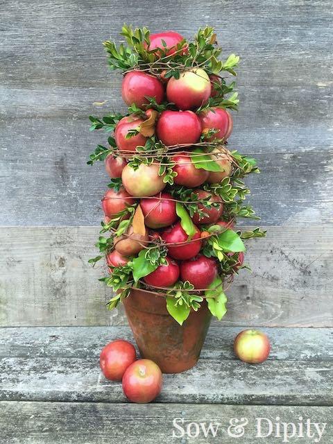 Apple topiary (6)