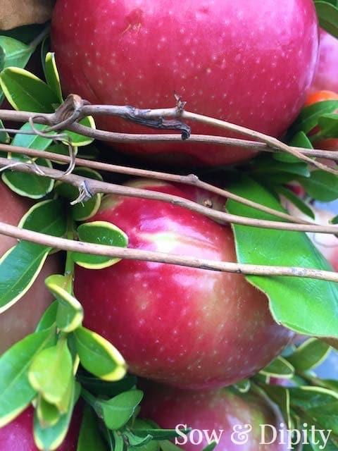 Apple topiary (8)