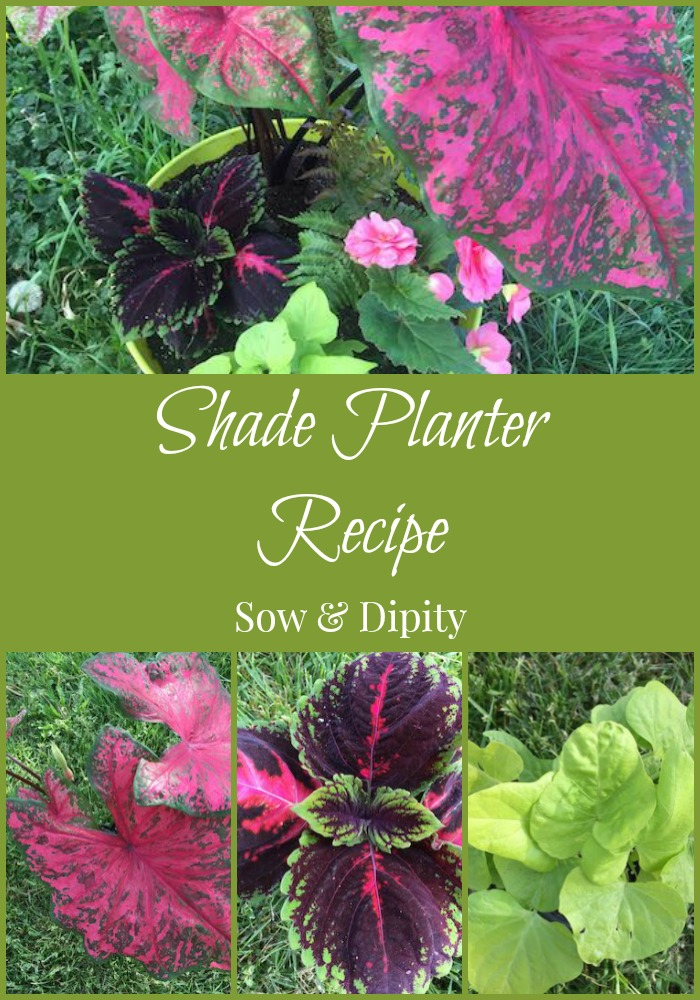 Shade Planter Recipe