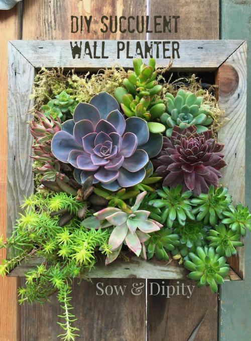 DIY Succulent Wall Planter