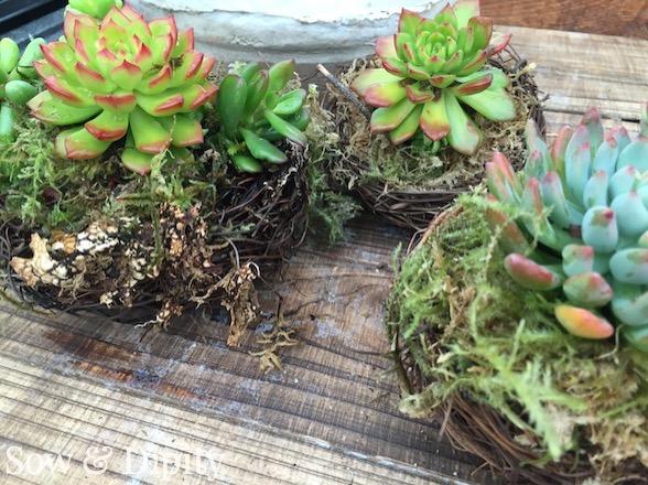 Birds nests succulent planter