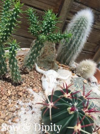 Cactus dish planter
