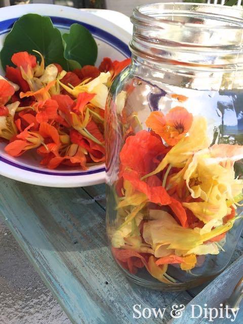 Nasturtium Jelly Recipe