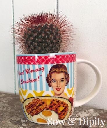 Succulent vintage coffee cup planter