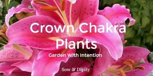 Plants to Balance the Crown Chakra