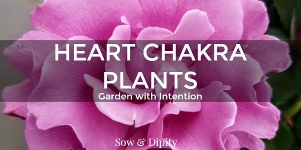 Plants to Balance the Heart Chakra